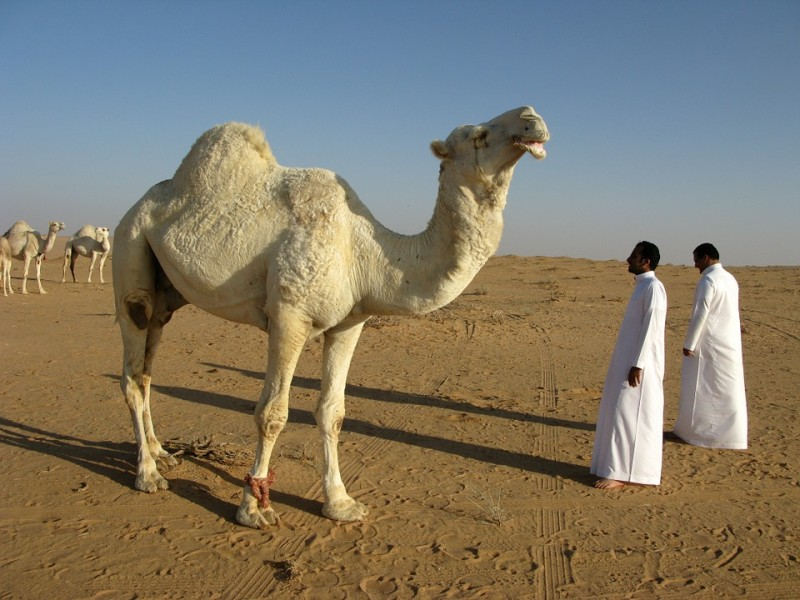 Саудитам больше не нужна дорогая нефть
