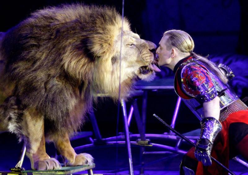 Тигры и львы против! Известные династии дрессировщиков могут остаться без работы