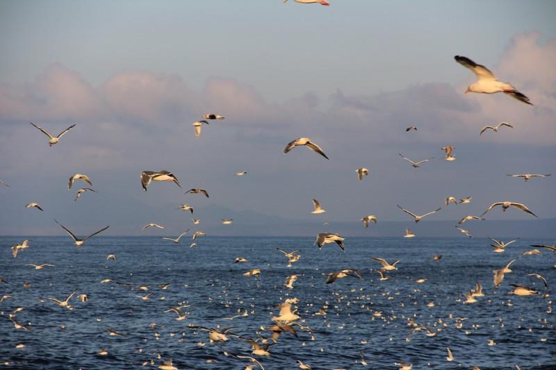 Неожиданное решение проблемы Курильских островов
