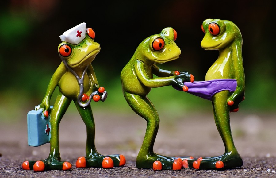 frogs-1672890_960_720