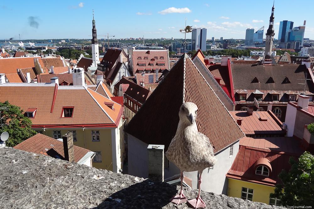 054_Estonia_Tallinn_Vyshgorod_014.JPG