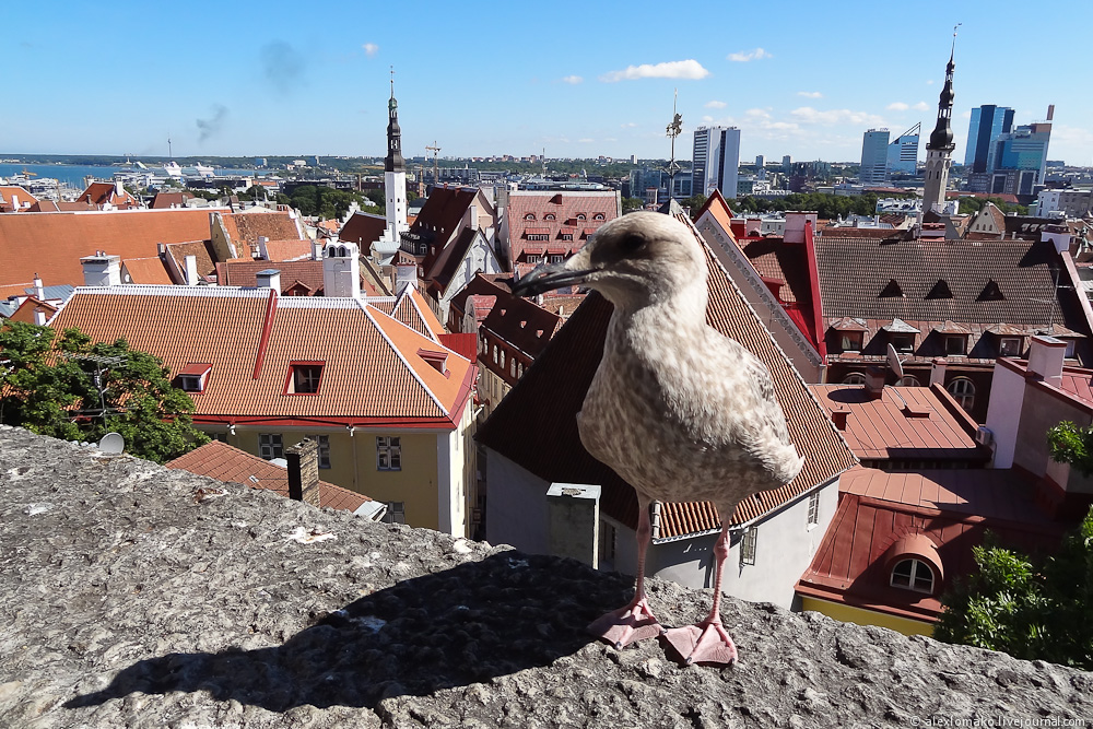 054_Estonia_Tallinn_Vyshgorod_015.JPG