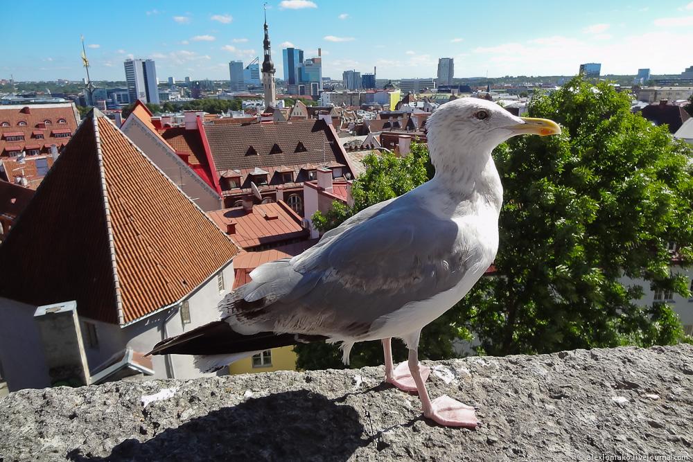 054_Estonia_Tallinn_Vyshgorod_021.JPG