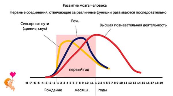 Развитие структур мозга