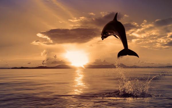 240941_okean_-delfin_-zakat_2560x1600_www.GdeFon.ru