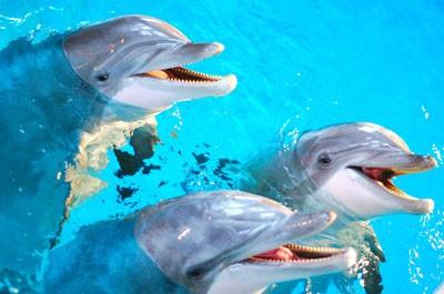 delfiner-skrattar