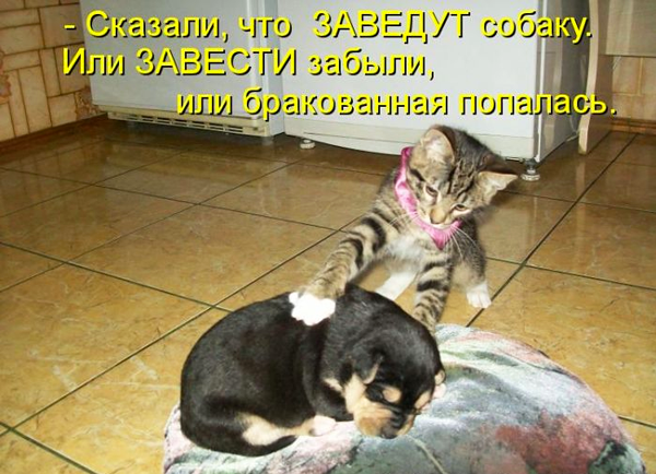 557108_476123012483178_1223598039_n