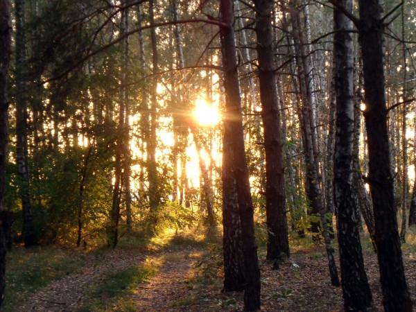 Вечер-в-лесу-1328616138_80