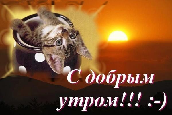 1291967917kisa_v_chashke