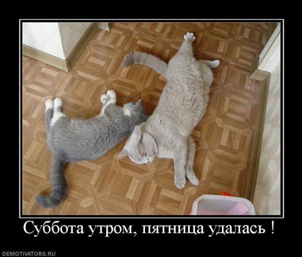 499269_subbota-utrom-pyatnitsa-udalas-