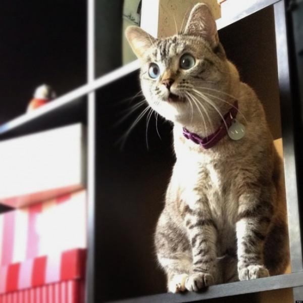 7155760-R3L8T8D-650-o-SURPRISED-CATS-facebook
