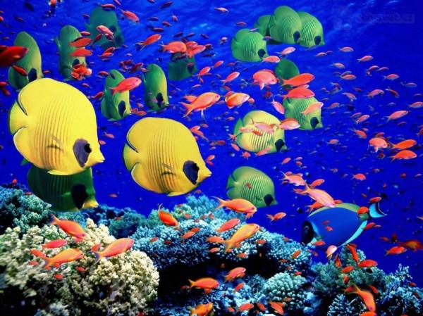 Большой Барьерный Риф, Австралия