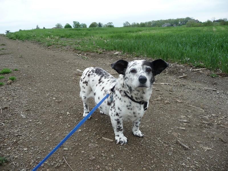 интересное-собака-живность-длинный-пост-1868283