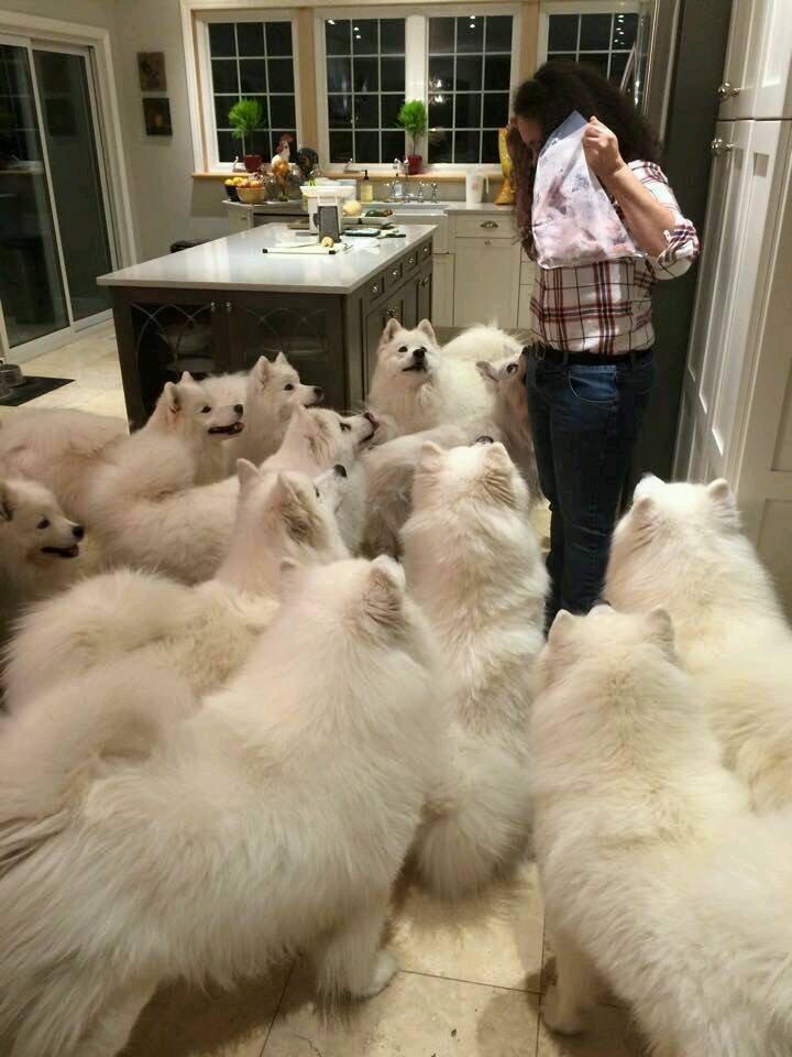 собакен-живность-1829551