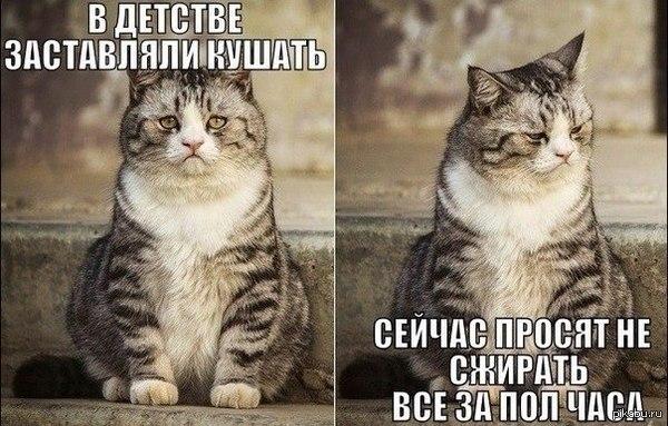 1425277839_1732344142