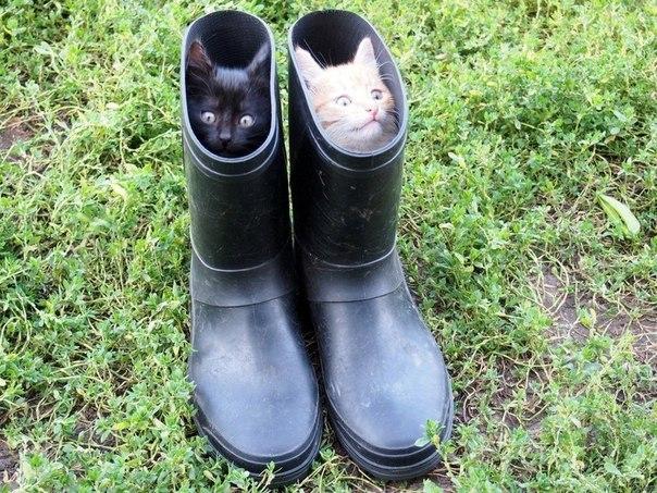 кот-живность-коты-в-сапогах-сапоги-1546829