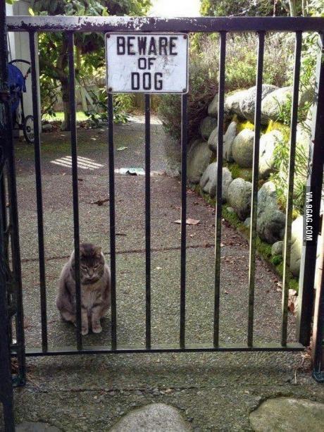 кот-живность-осторожно-собака-песочница-1546426