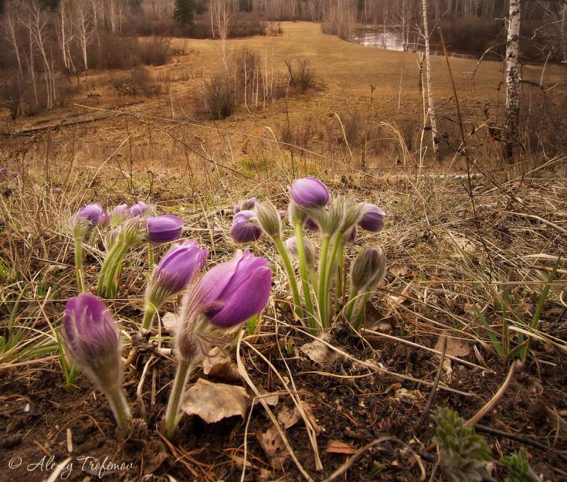 Тихие знаки сибирской весны.