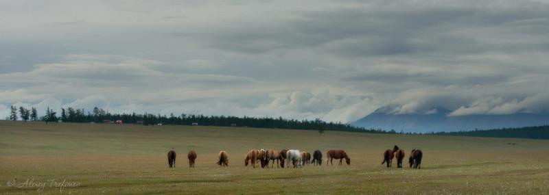 Mongolia_2019_08_Horses-on-Plateau.jpg
