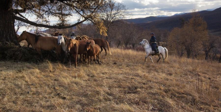 Монголия. Ветер степей, Хээрийн салхи