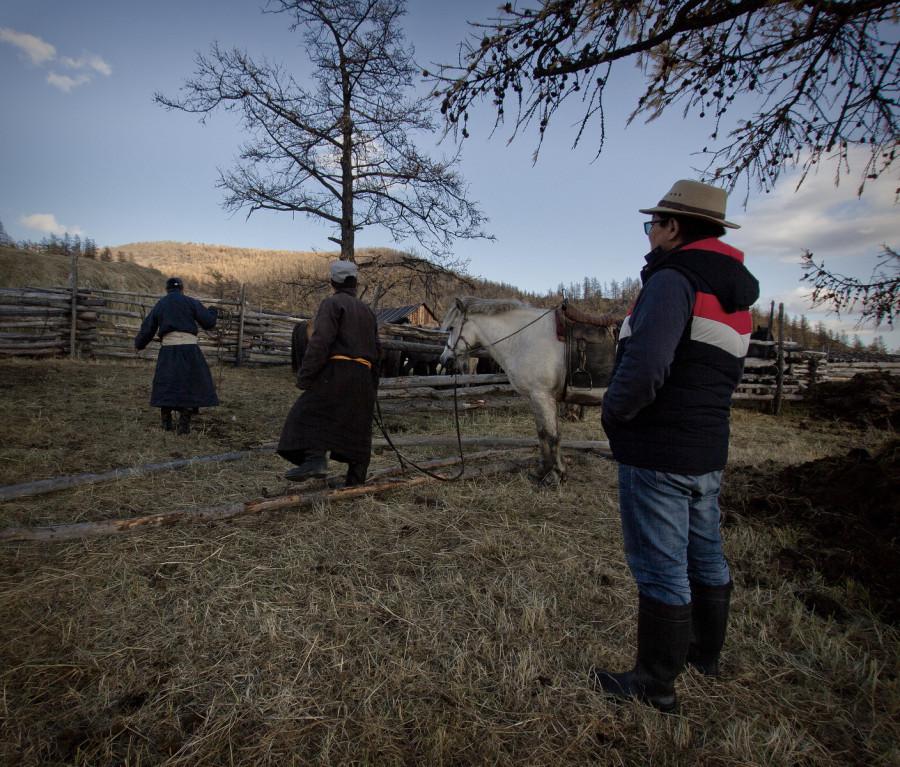 Mongolia_2019_09_Horses-3.jpg