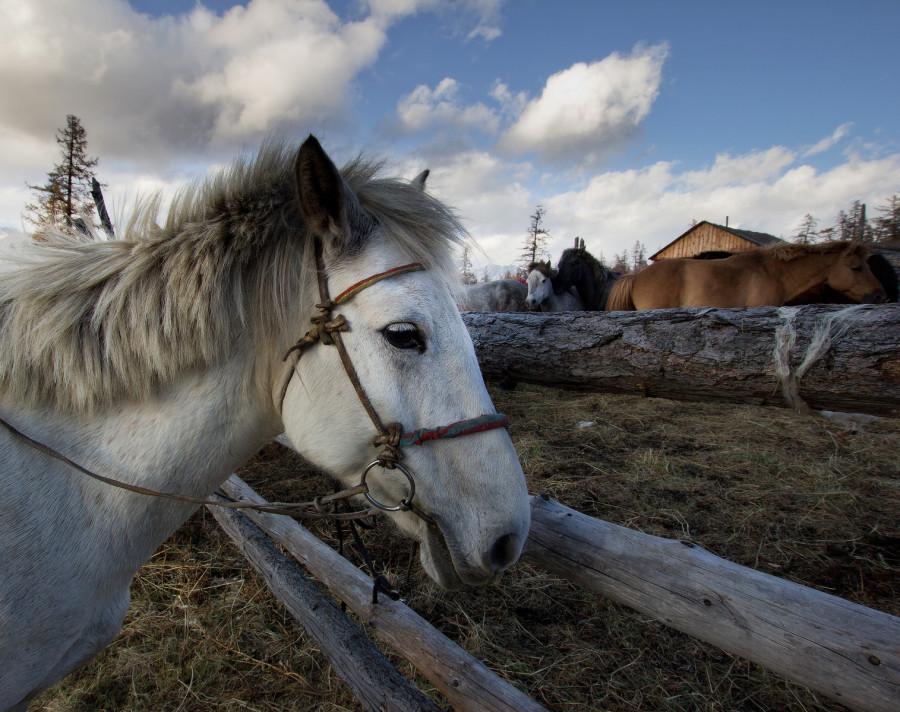 Mongolia_2019_09_Horses-4.jpg