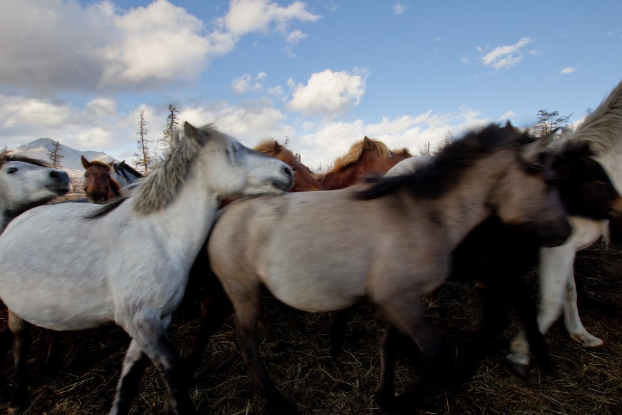 Mongolia_2019_09_Horses-5.jpg