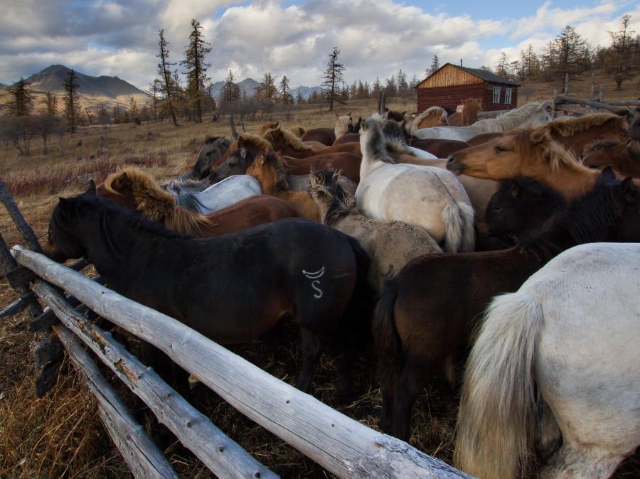 Mongolia_2019_09_Horses-6.jpg