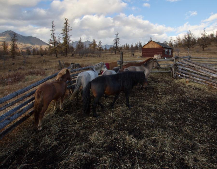 Mongolia_2019_09_Horses-7.jpg