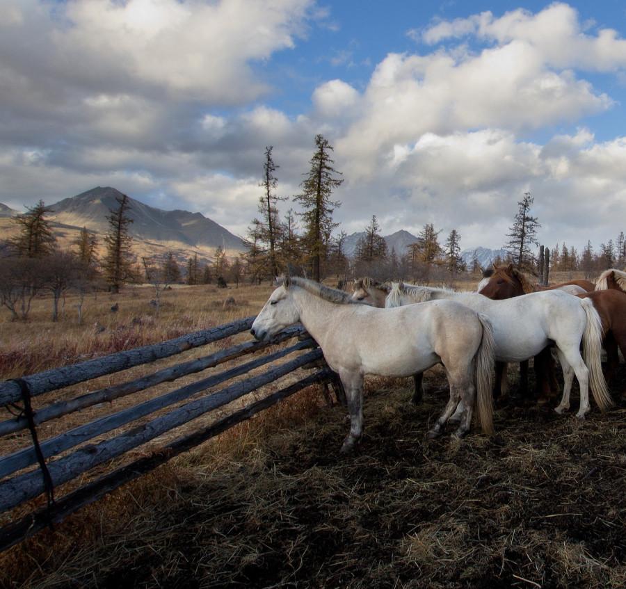 Mongolia_2019_09_Horses-8.jpg