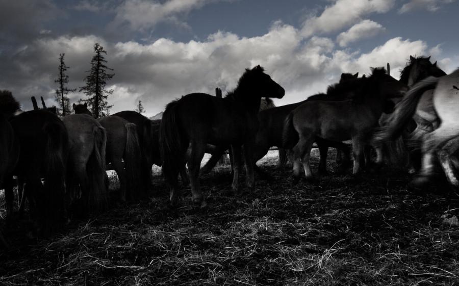 Mongolia_2019_09_Horses-9.jpg