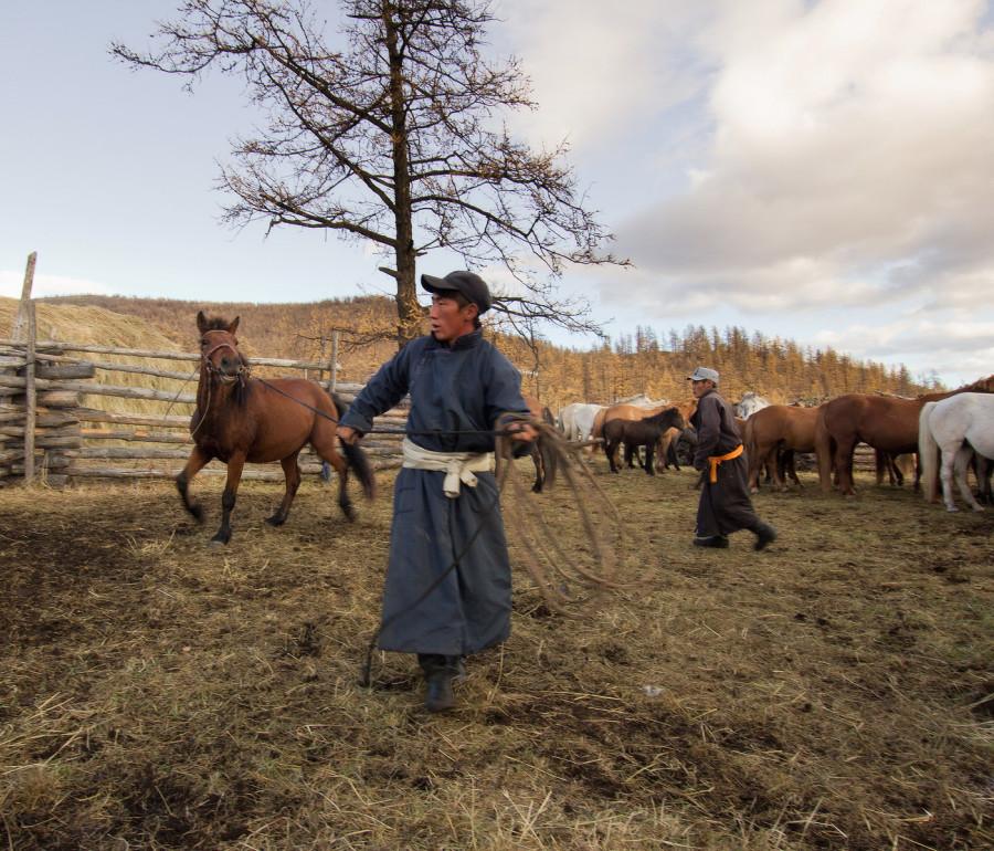 Mongolia_2019_09_Horses-10.jpg