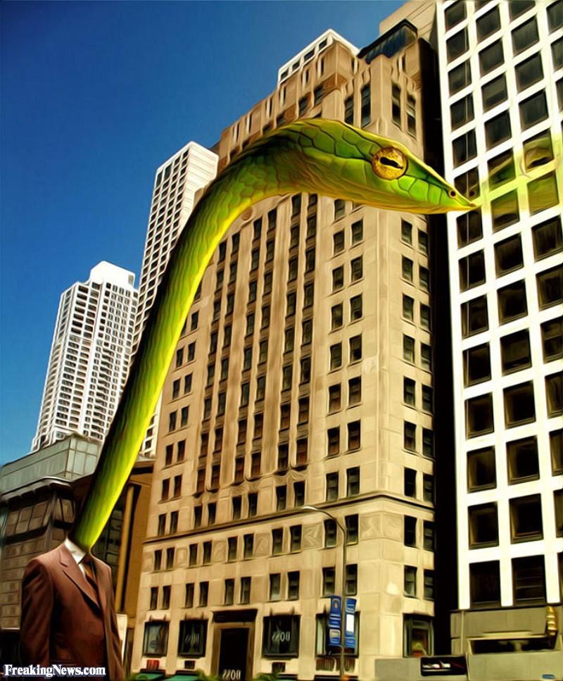 Snake-Voyeur--87936