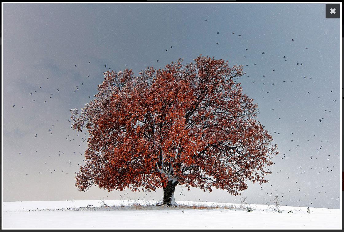 2016-02-04 22-57-37 Photo Tree of Life - Evgeni Dinev - YellowKorner - Mozilla Firefox