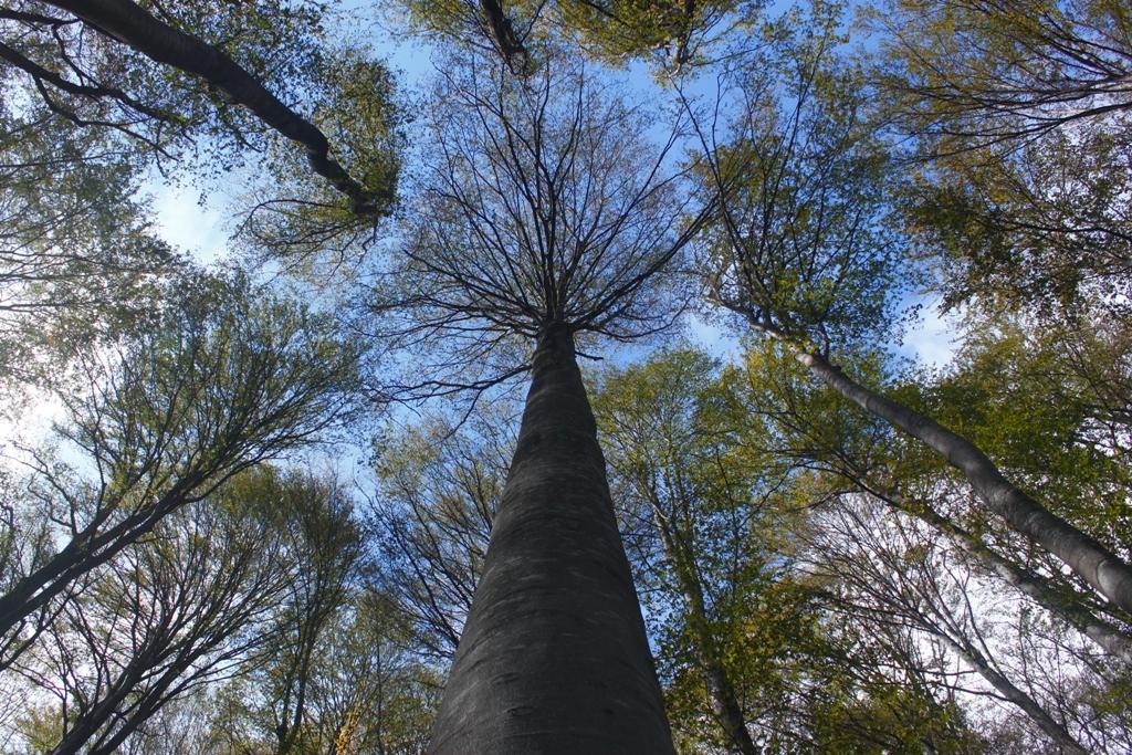 лес в Бреснике