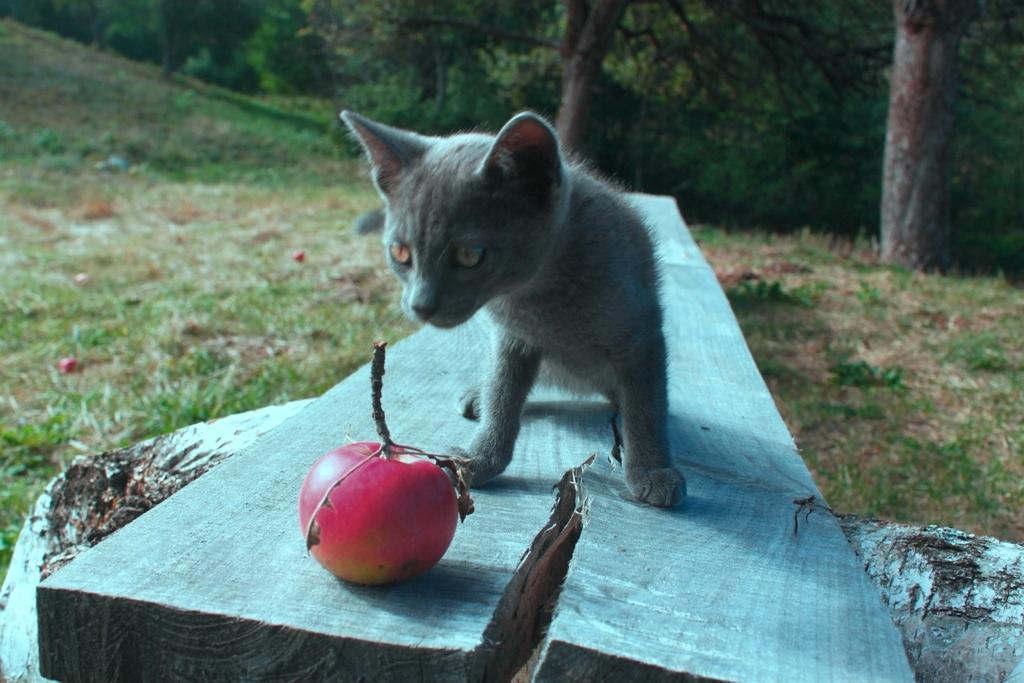 кот и яблоко