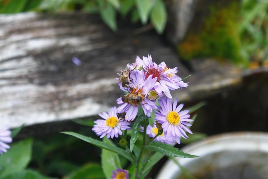пчелы в Сербии
