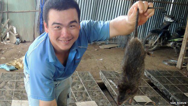 этой статье крысы во вьетнаме на улицах фото один пример