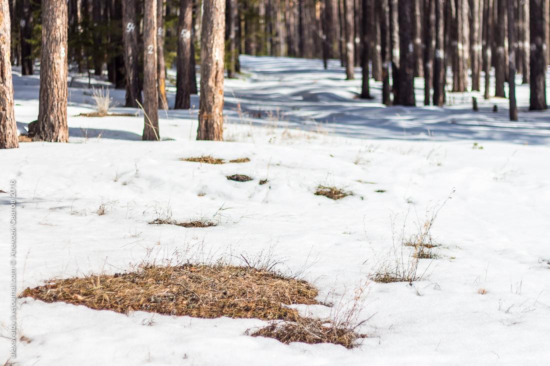 картинка проталин весной прячется левом