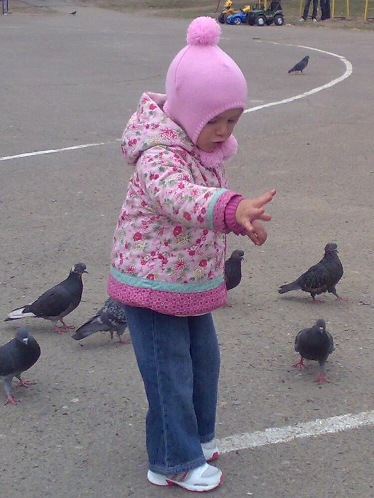 pigeons1.jpg