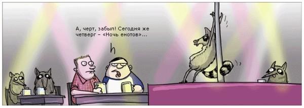 ночь енотов