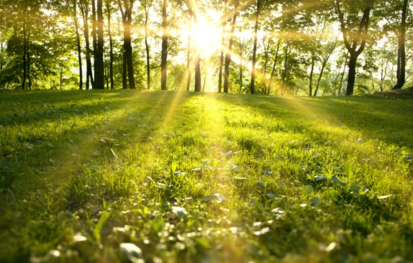 spring-park-sunlight-forest