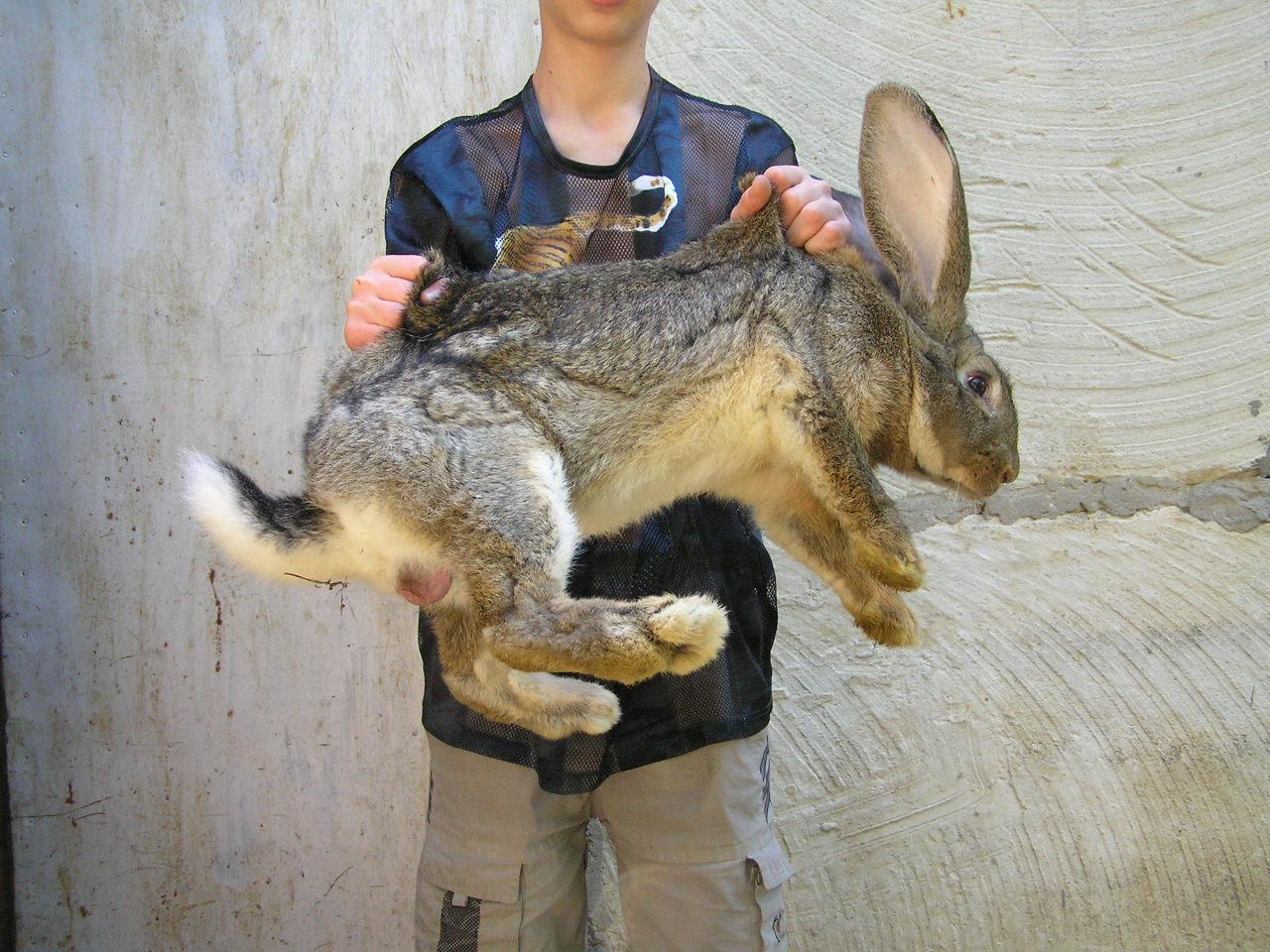 Сперма кроликов купить