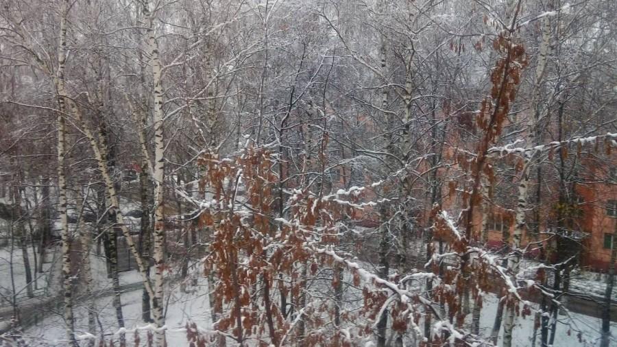 ноябрьское утро в Лунёво