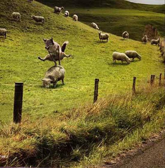amusing-pictures-02.jpg