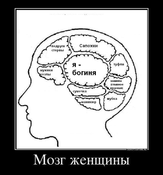 Картинка женский мозг