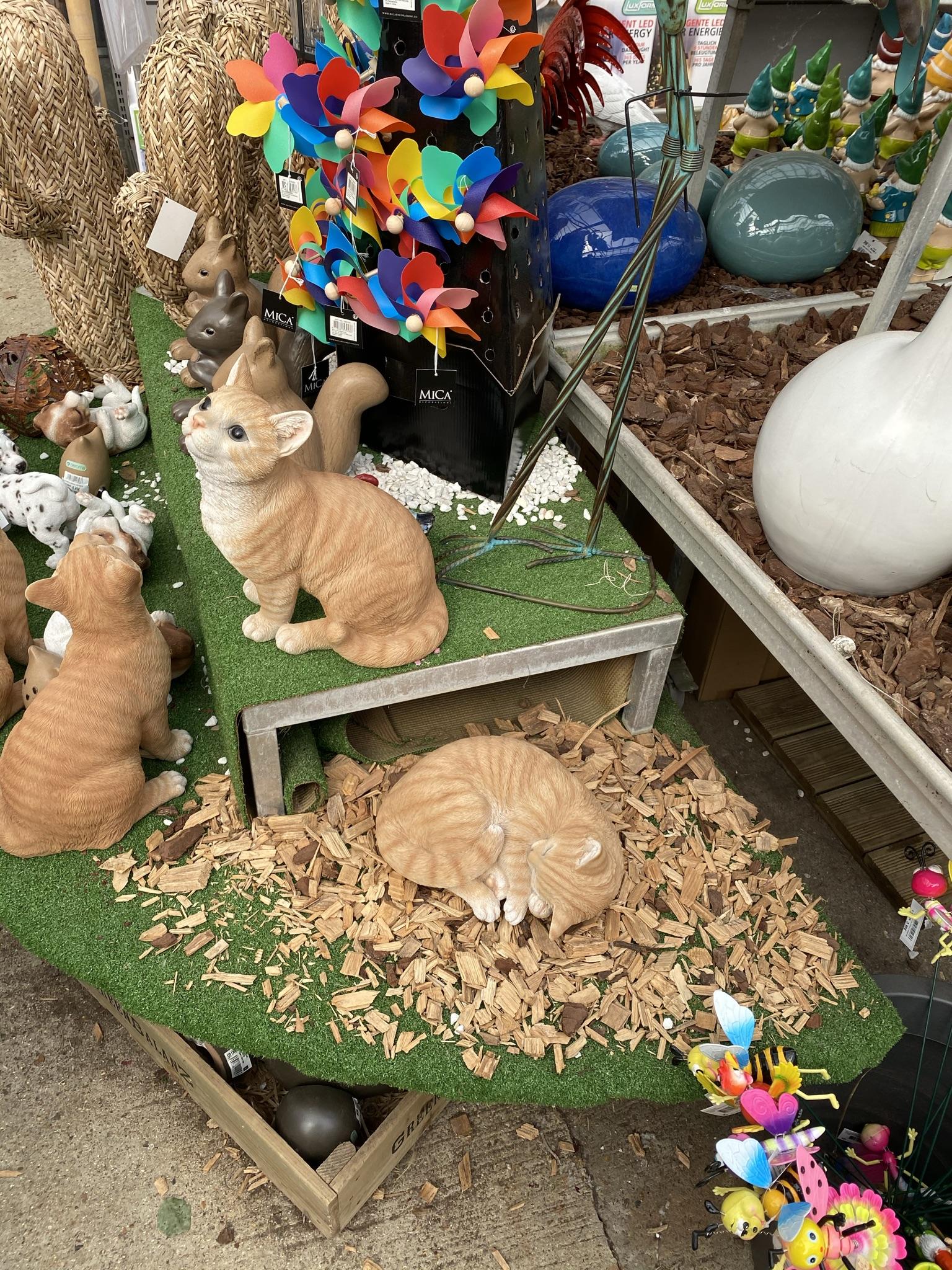 Садовые котики