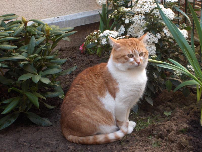 Кот по имени Чубайс. Первые 4 года он провел в России, а потом переехал на ПМЖ во Францию.