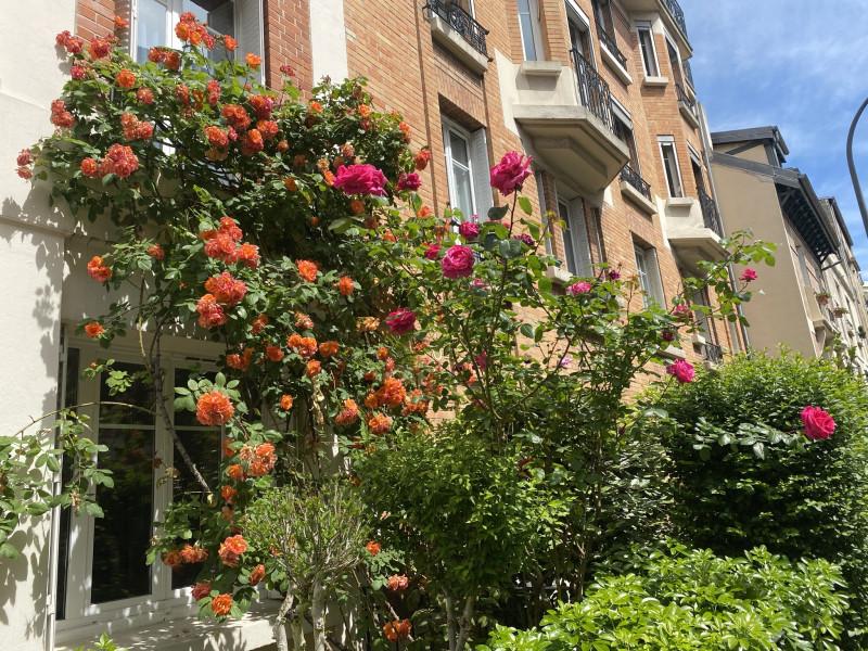 6. Розы перед многоквартирным домом.