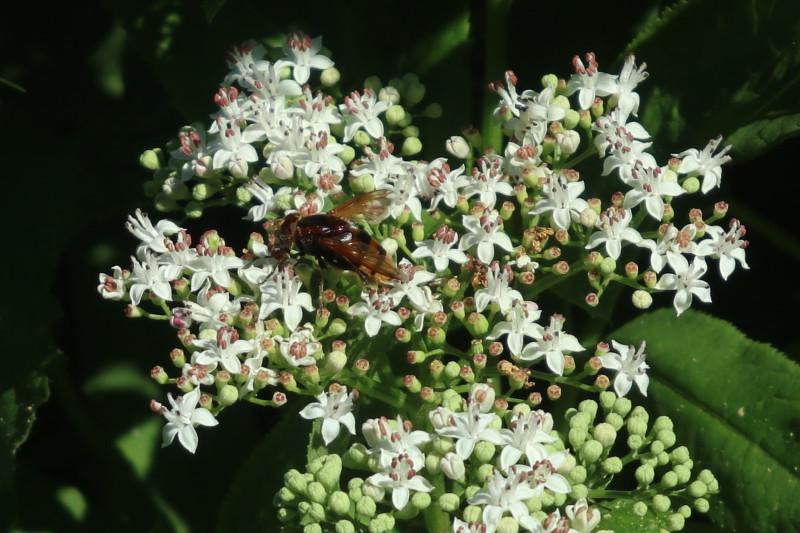 26. Пчела